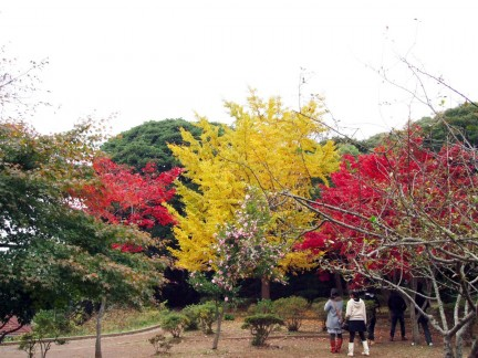 海蔵寺紅葉